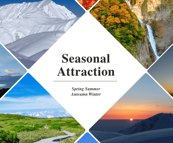 Seasonal Attraction