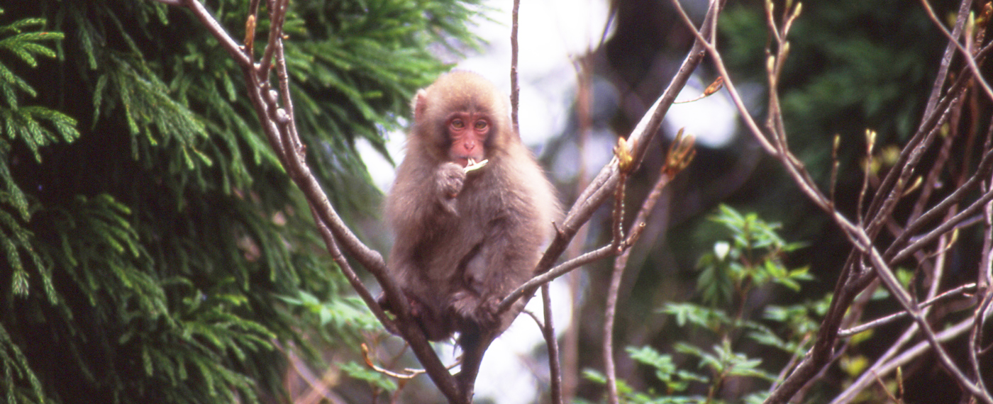 These monkeys are sometimes seen along the route.